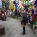 31 weken Darjeeling